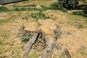 Stump Removal & Tree Removal Service From BDC