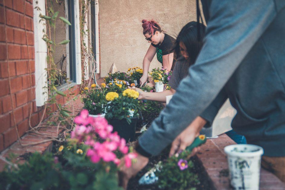 People planting in garden