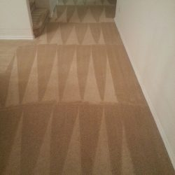 Pet Urine stain Removal carpet cleaning san antonio