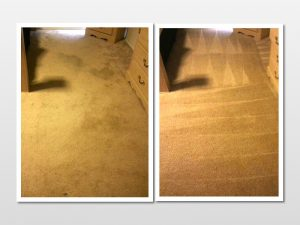 steam cleaning carpet cleaning