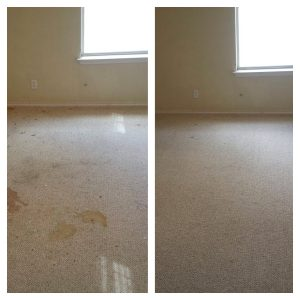 Carpet Cleaning pet treatment