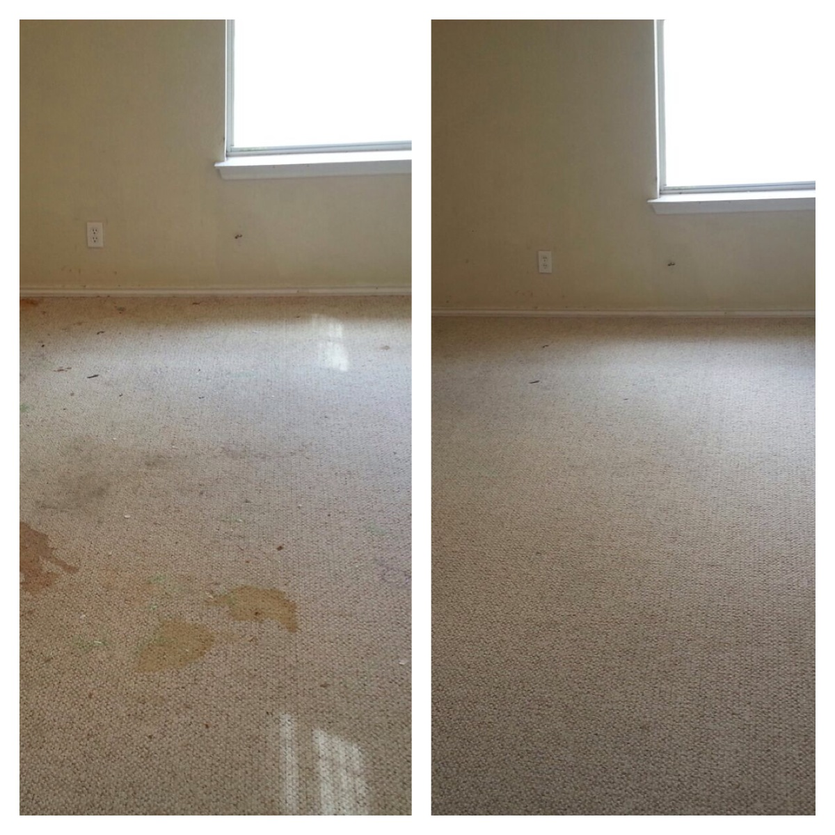 rated #1 carpet cleaner san antonio