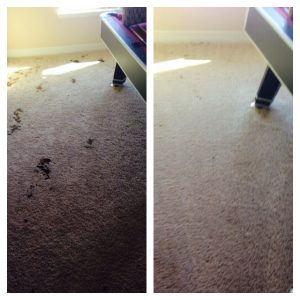 best carpet cleaning company in san antonio