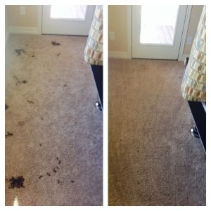 carpet cleaning san antonio pet urine