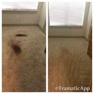 carpet cleaning pet urine treatment san antonio