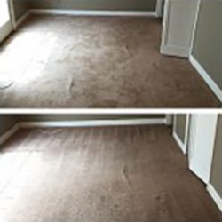 Pet Urine Stain Removal, best professional carpet cleaning san antonio