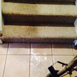 pet stain removal san antonio