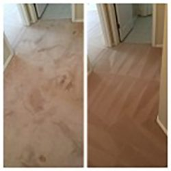 pet stain carpet cleaning san antonio