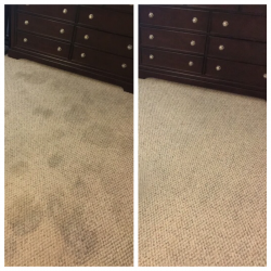 best professional carpet cleaning san antonio