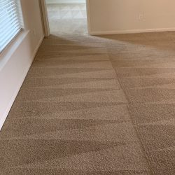 Best Carpet Cleaners in San Antonio
