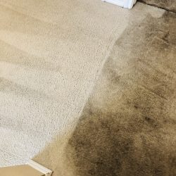 Dirty to Clean Carpet Cleaning San Antonio