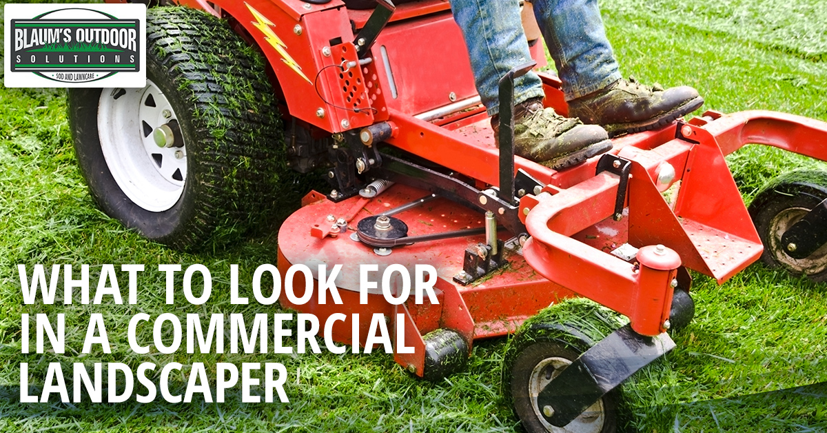 what to look for in a commercial landscaper