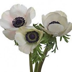 Wedding Flowers: Anemone