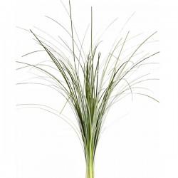 Wedding Flowers: Bear Grass
