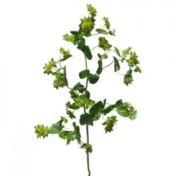 Wedding Flowers: Bupleurum