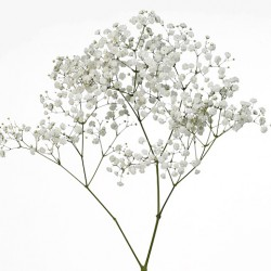 Wedding Flowers: Gypsophila