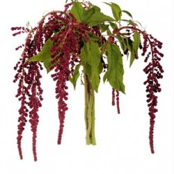 Wedding Flowers: Amaranthus