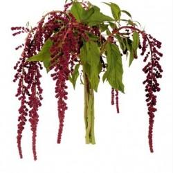 Wedding Flowers: Amaranthus