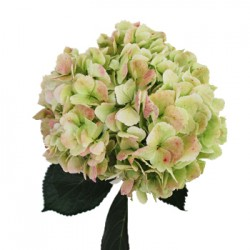Wedding Flowers: Hydrangea