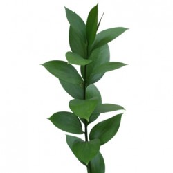 Wedding Flowers: Israeli Ruscus