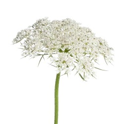 Colorado Wedding Flowers: Queen Annes Lace