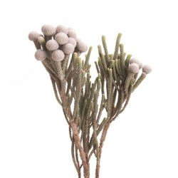 Wedding Flowers: Silver Brunia