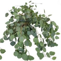 Wedding Flowers: Silver Dollar Eucalyptus