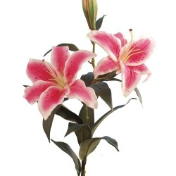 Wedding Flowers: Stargazer Lily