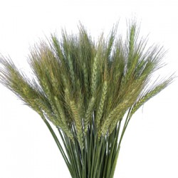 Wedding Flowers: Wheat Grass
