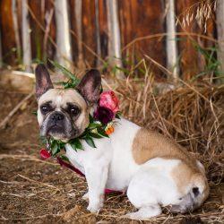 A cute floral collar.