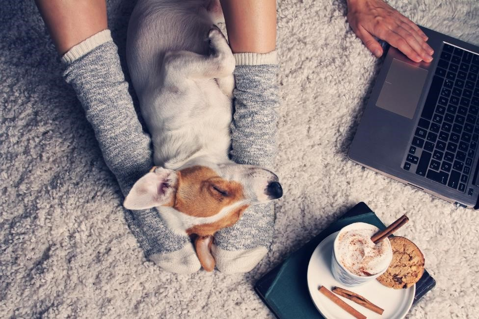 a young girl on a laptop computer with a dog sleeping between her legs and a plate of hot cocoa and a cookie nearby
