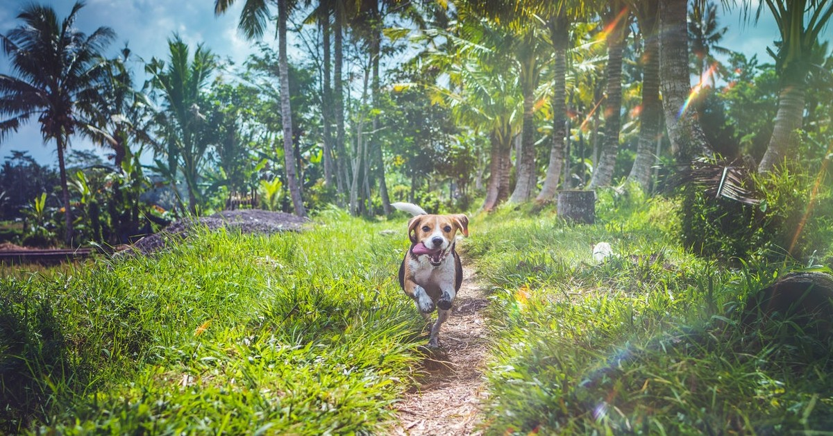 tips to keep pets cool during summer boyd brothers punta gorda