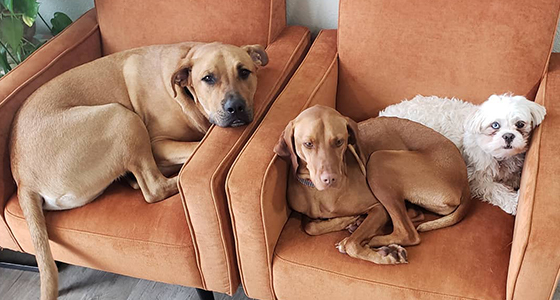 3 dogs resting