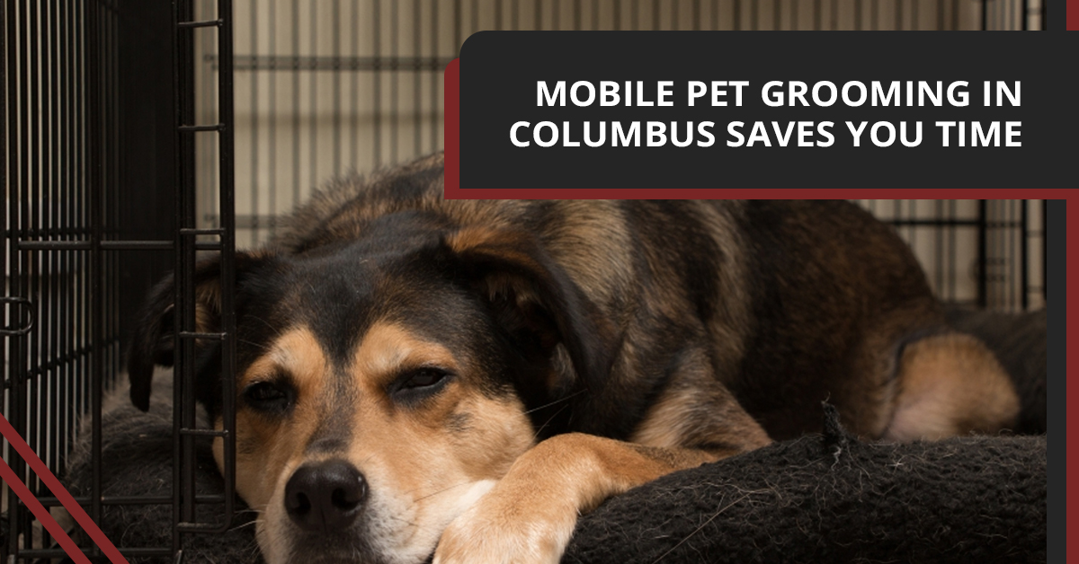 Mobile Pet Grooming Columbus: Signs That You Are Too Busy