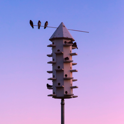 An effective mosquito control technique is by encouraging natural predators of mosquitoes like these purple martins here in Minocqua, WI.