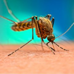 Mosquito-borne diseases here in Neenah, WI are a great reason to get mosquito control services from Buzz Off Mosquito Solutions.