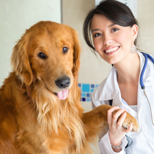 animal hospital Davie FL