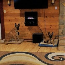 Two dogs sitting on beds inside our dog boarding facility - Canine Oasis