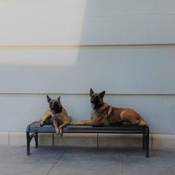Two dogs sitting on a bench outside at our dog boarding facility - Canine Oasis