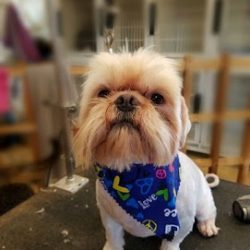 A small dog after being groomed at our doggy daycare - Canine Oasis