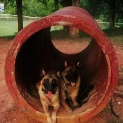 Two dogs hanging out in an outdoor play area - Canine Oasis