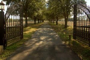 web-17-gatestrees-300x201