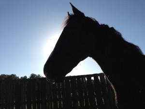 horse-sillouette-300x225