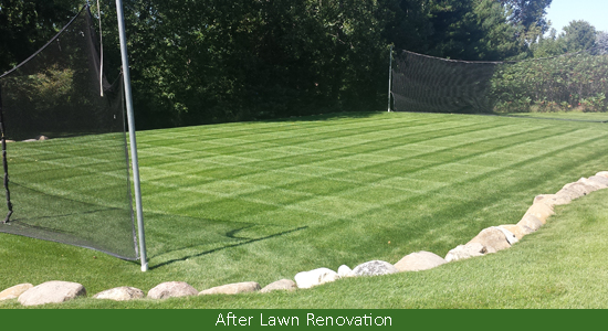Lawn reno after cropped