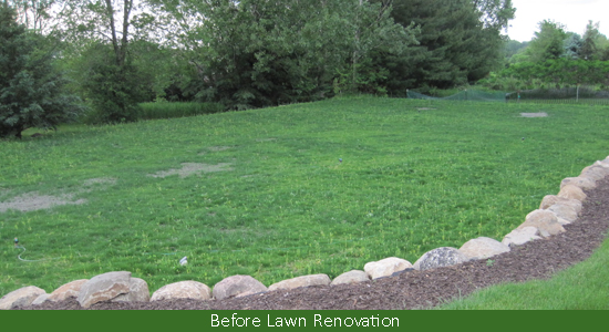 Lawn reno before cropped