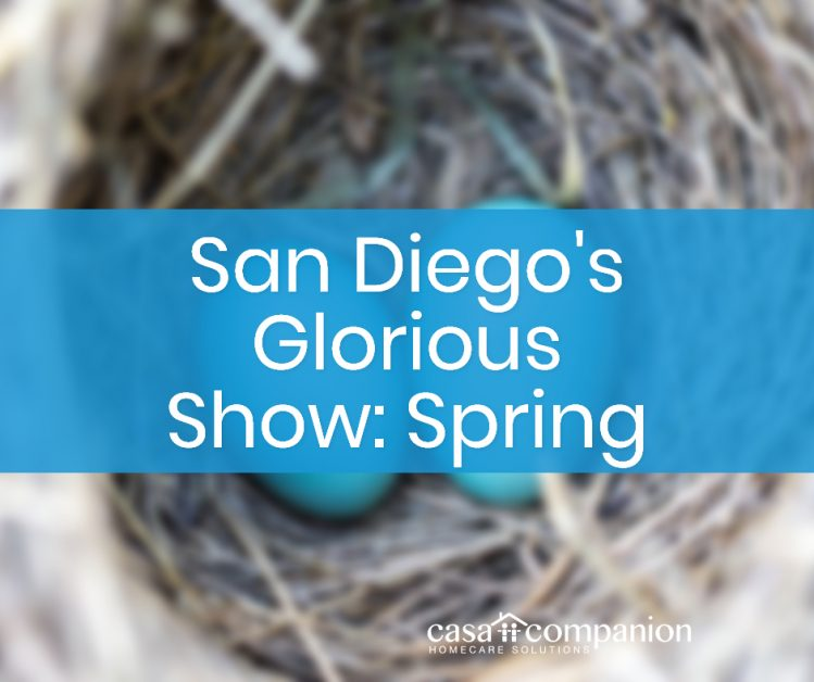 Elderly care in San Diego Spring Show
