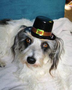 Happy Thanksgiving, Pilgrim!