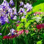Cedar Hill Garden