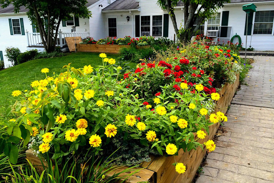 Garden of flowers at Vermont dementia care center
