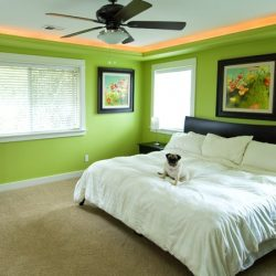 A puppy to match some bright interior painting in South Carolina